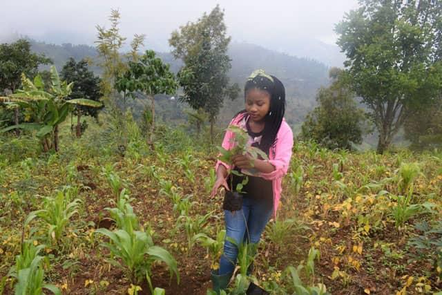 Progetto Green Hotel Le Grazie per la foresta pluviale in Kenia. Turismo Ecosostenibile