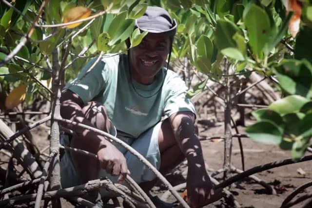 Progetto Green Hotel Le Grazie per le foreste di mangrovie in Madagascar. Turismo Eco-sostenibile