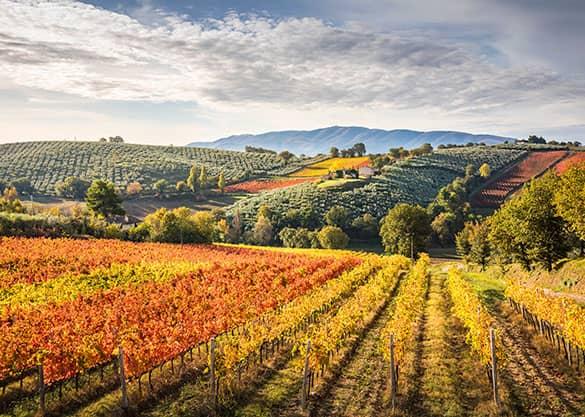 L'Umbria, il cuore verde d'Italia, è una regione ricca dimagia,spiritualitàenatura. Vi Aspettiamo ad Assisi